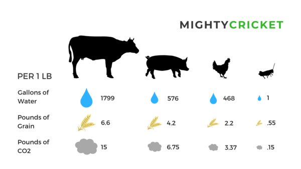 Mighty Cricket Protein Powder sustainability comparison between beef, pork and chicken.